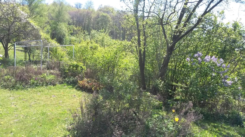 Terrasse Blick in Garten mit benachbarten Obstwiesen